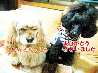 035_20121025203206.jpg
