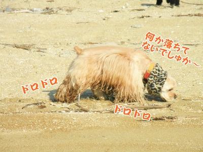 036_20130113191031.jpg