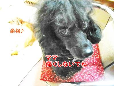 040_20121202161926.jpg