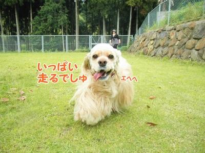 041_20130605210704.jpg