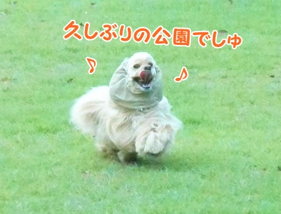 043_20120913212734.jpg