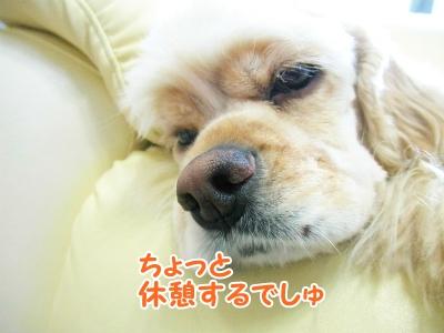 043_20120918213241.jpg