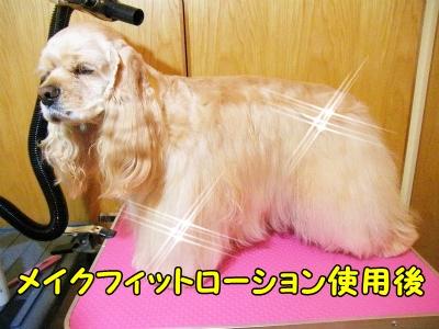 043_20121213221536.jpg