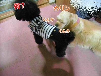 045_20121025212117.jpg