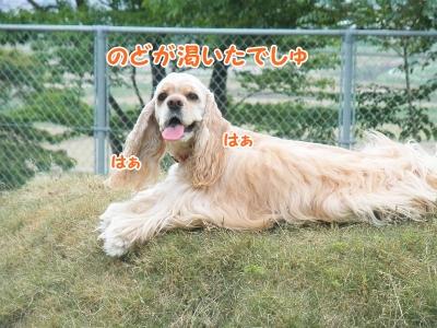 047_20130605210941.jpg