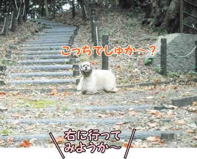 051_20121111215834.jpg