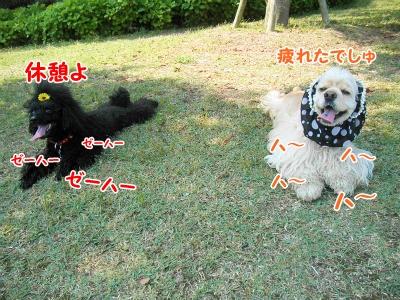 052_20120603213327.jpg