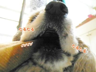 052_20121218220743.jpg