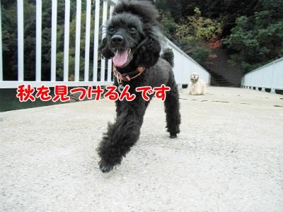 056_20121111215833.jpg