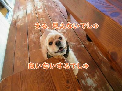 058_20121029230851.jpg