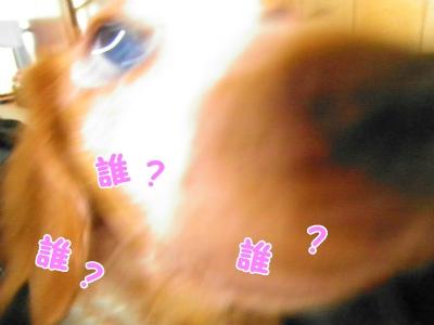 059_20130715213202.jpg