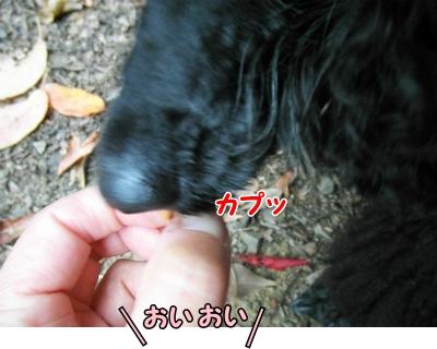 060_20121111215920.jpg