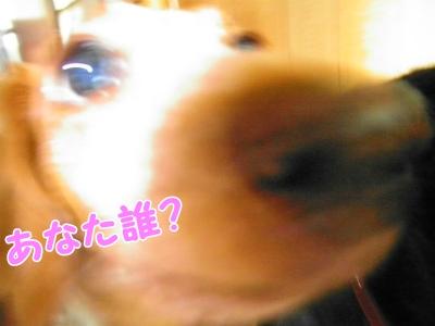 060_20130715213351.jpg