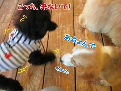 068_20121030225203.jpg