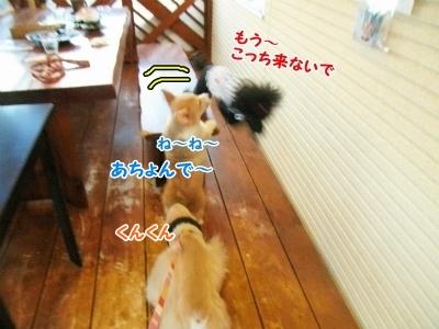 072_20121030231036.jpg