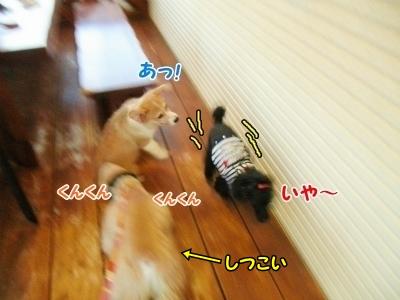 073_20121030231036.jpg