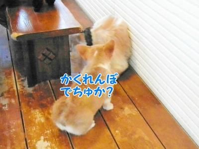 077_20121030231035.jpg
