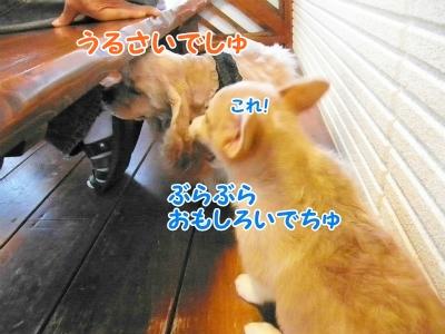 087_20121030231202.jpg