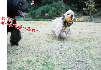 088_20121111220002.jpg