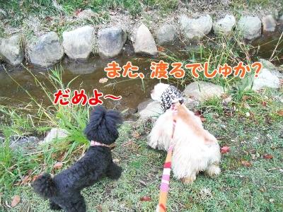 095_20121111220026.jpg
