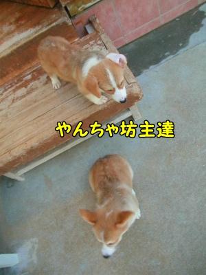 096_20121029231103.jpg
