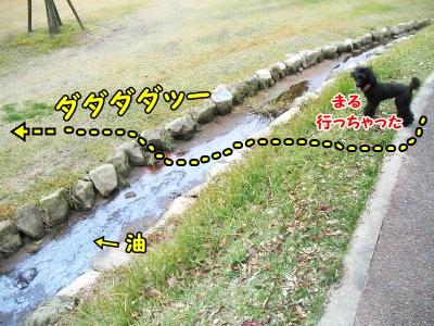 096_20121111220025.jpg