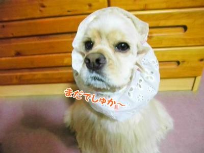 099_20120603210511.jpg
