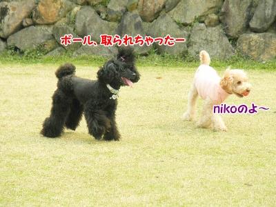 102_20130403210953.jpg