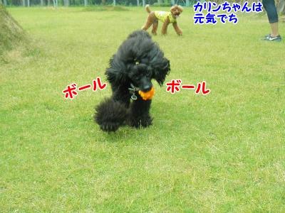 105_20130605211143.jpg