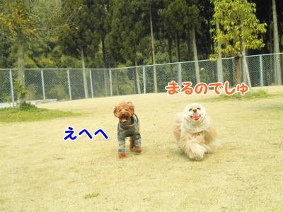 159_20130403212636.jpg