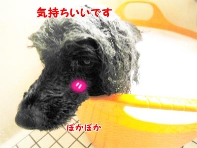 173_20121204200535.jpg