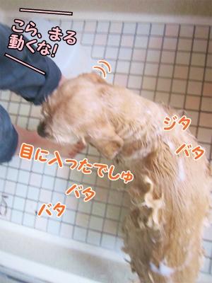 177_20121204203500.jpg