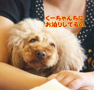 198_20120520204341.jpg
