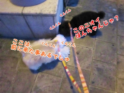 s075_20120904202940.jpg