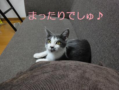 保護ネコジョニー