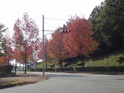 小松の紅葉