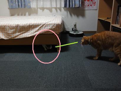 ライちゃんと保護ネコジョニー