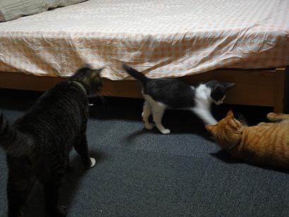 ライちゃんと保護ネコジョニーとトラちゃん
