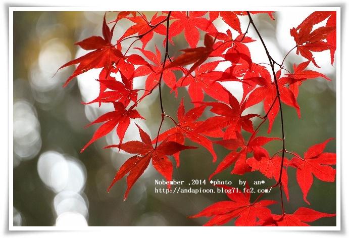 20141110 IMG_1352