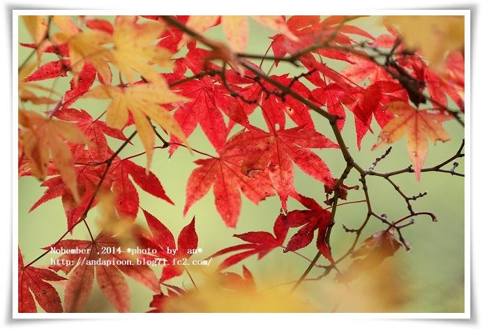 20141110 IMG_1410