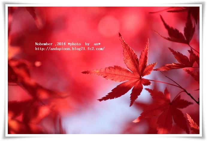 20141125 IMG_5026