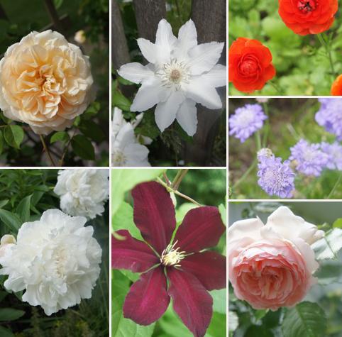 お庭の花たち