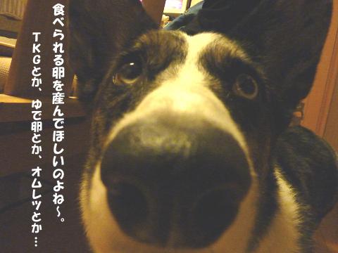 20127316.jpg