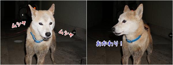 20141120_5.jpg