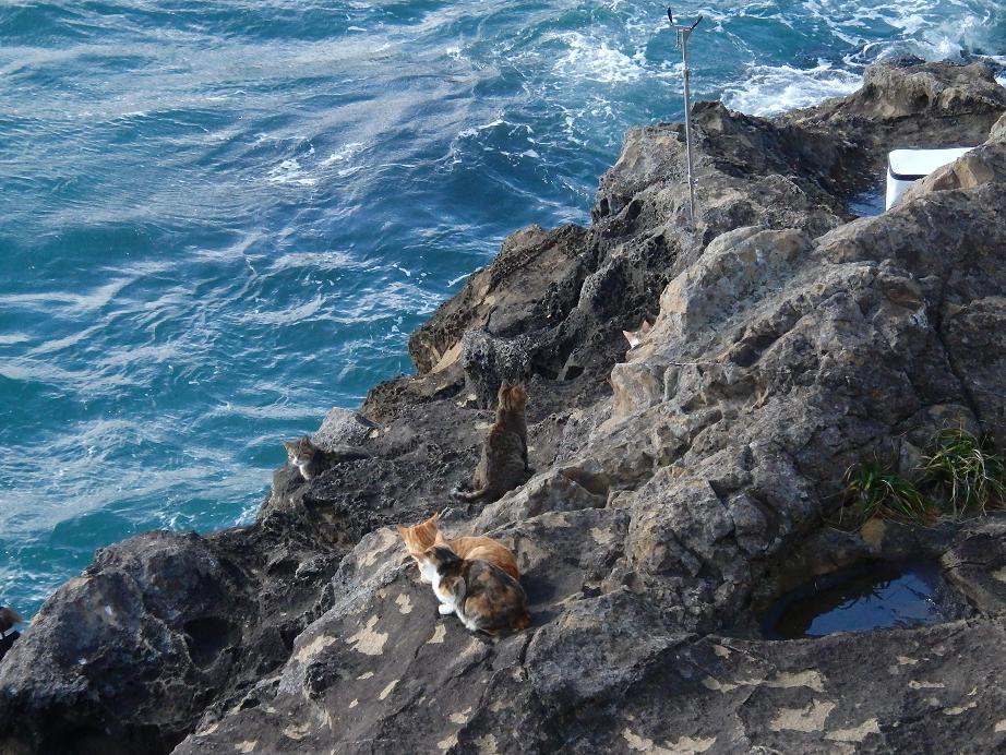 201312灯台島2猫