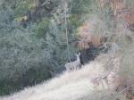 20131201_animal4.jpg
