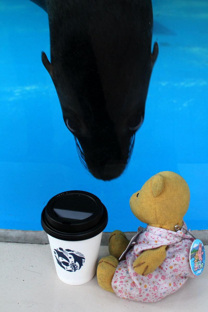 サンシャイン水族館 アシカが