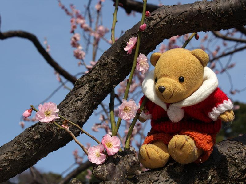清水山公園の梅の花と