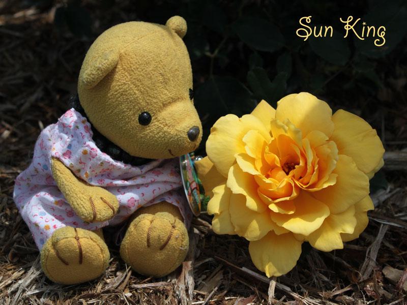 Sun King と・100522