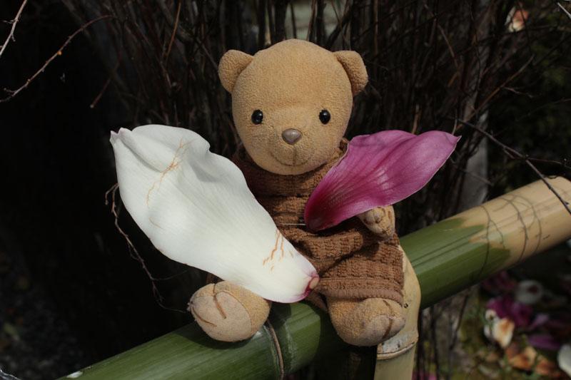 モクレンの花弁と 130320